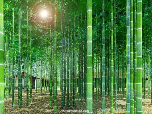 Bamboo protects environment