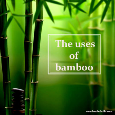 The uses of bamboo