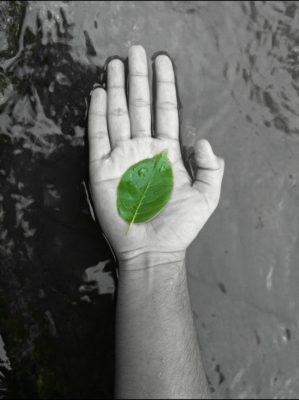 Human attitude to nature